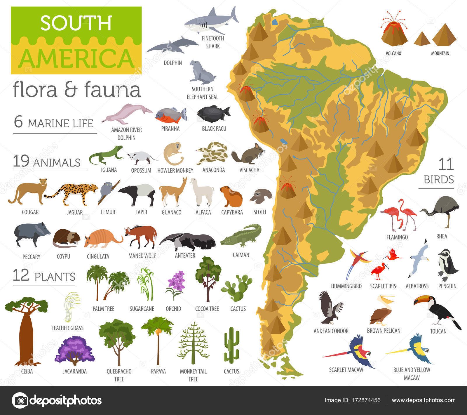 South America Flora And Fauna Map Flat Elements Animals Birds