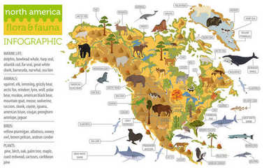 North America flora and fauna map, flat elements. Animals, birds