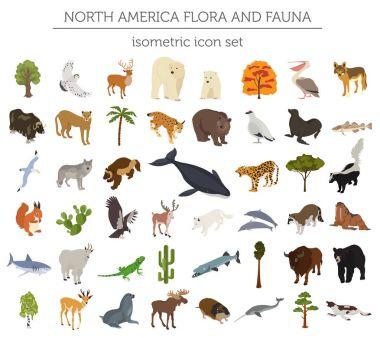 Isometric 3d North America flora and fauna elements. Animals, bi