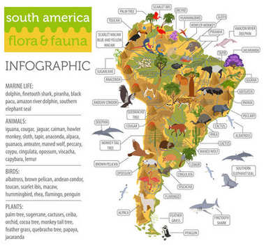 South America flora and fauna map, flat elements. Animals, birds