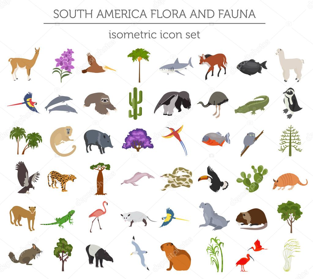 Isometric 3d South America flora and fauna elements. Animals, bi