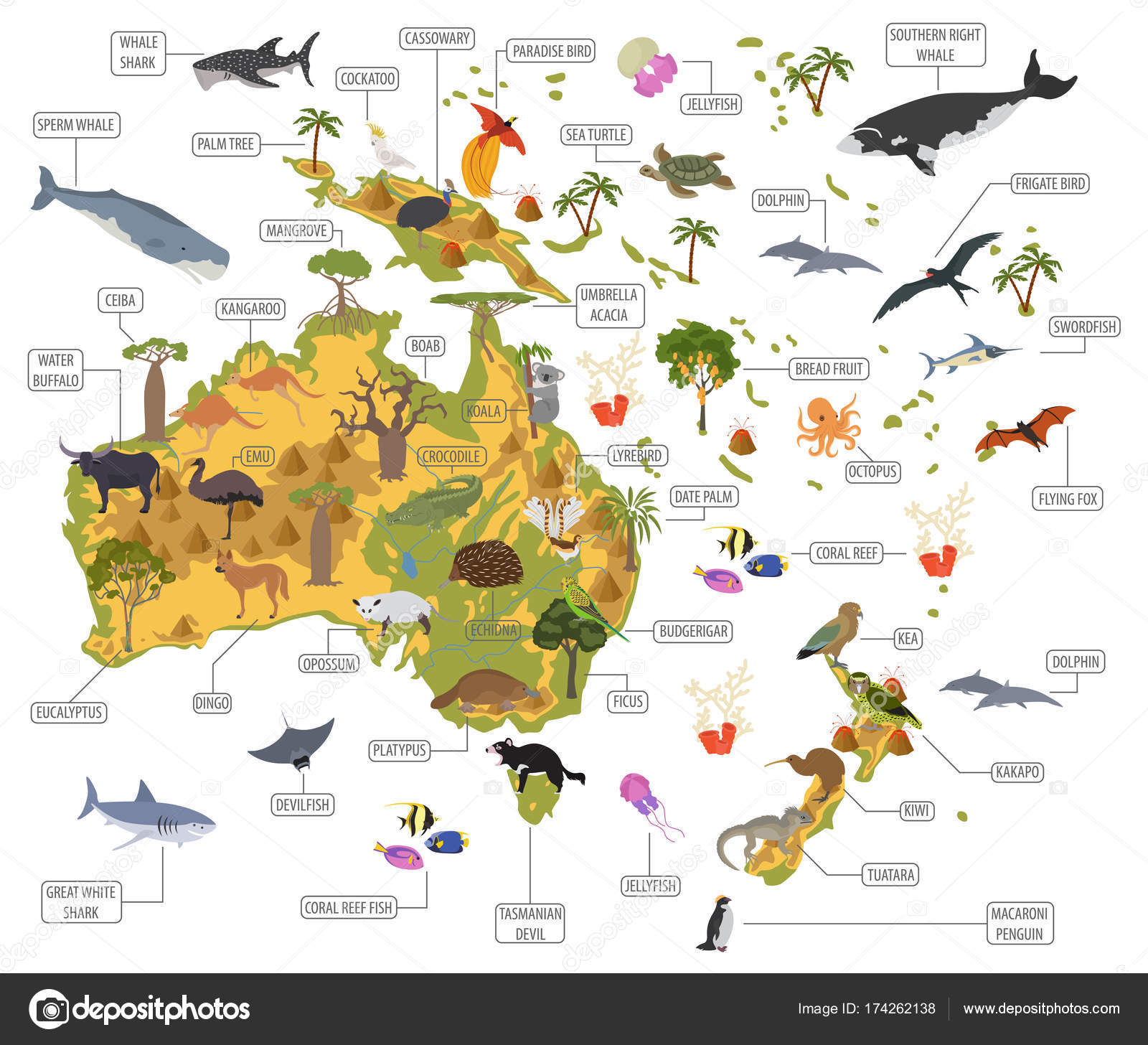 Australia And Oceania Flora And Fauna Map Flat Elements Animal