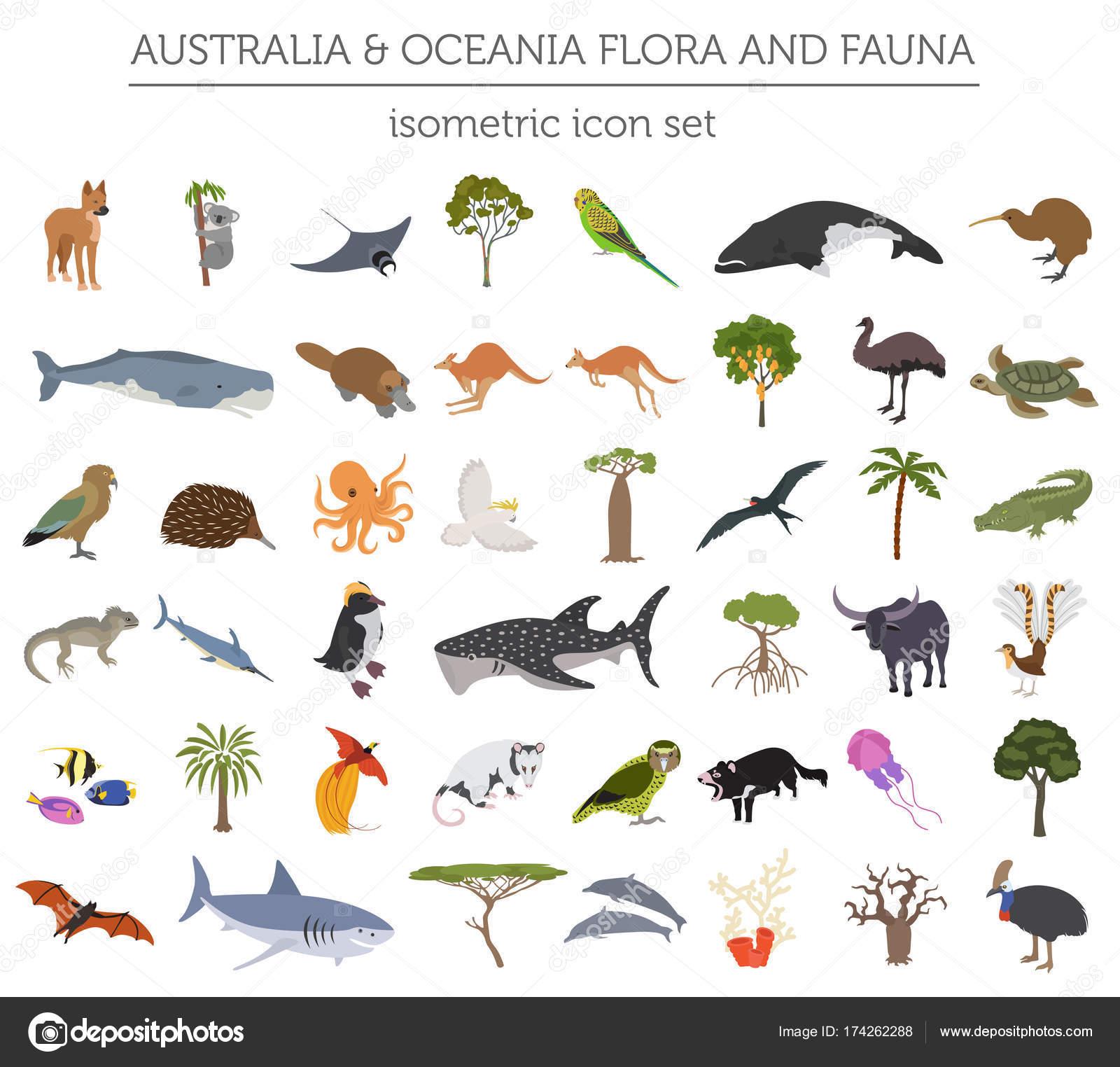 Fauna y flora de Australia y Oceanía 3d isométrica mapa elementos ...