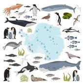 Photo Antarctic, Antarctica,  flora and fauna map, flat elements. Anim
