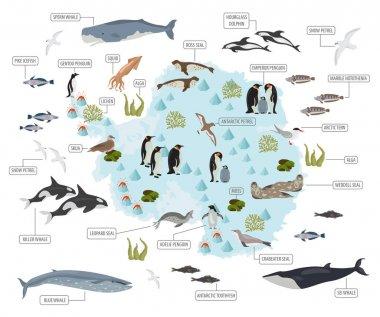 Antarctic, Antarctica,  flora and fauna map, flat elements. Anim