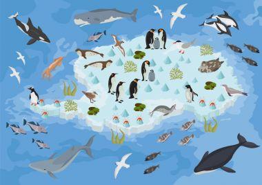 Isometric 3d Antarctica flora and fauna map elements. Animals, b