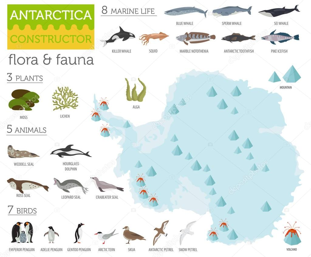 Antarctic, Antarctica,  flora and fauna map, flat elements. Anim