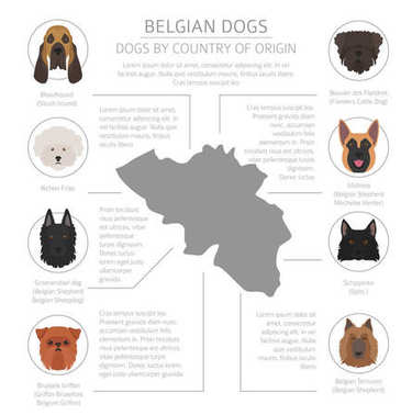 Dogs by country of origin. Belgium dog breeds. Infographic templ