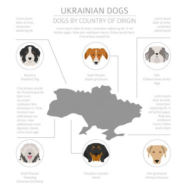 Dogs by country of origin. Ukrainian dog breeds. Infographic tem