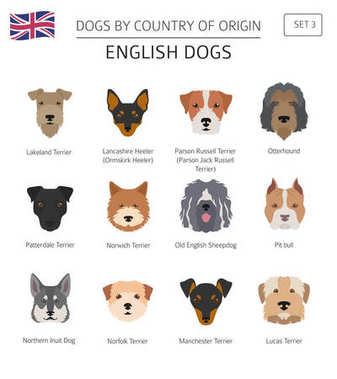 Dogs by country of origin. English dog breeds. Infographic templ