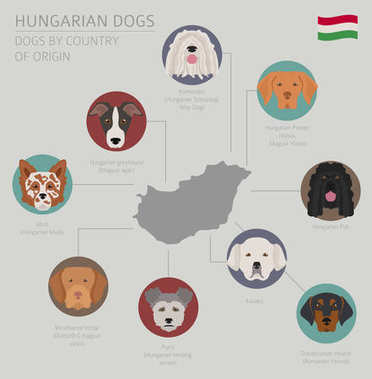 Dogs by country of origin. Hungarian dog breeds. Infographic tem