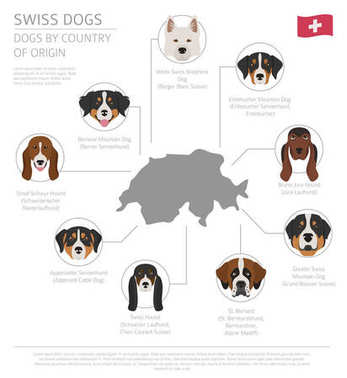 Dogs by country of origin. Swiss dog breeds. Infographic templat