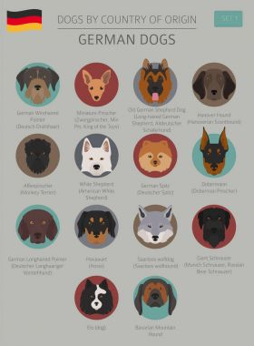Dogs by country of origin. German dog breeds. Infographic templa