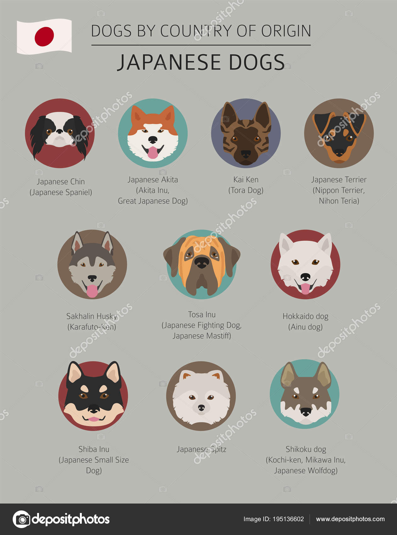 Dogs By Country Of Origin Japanese Dog Breeds Infographic Temp