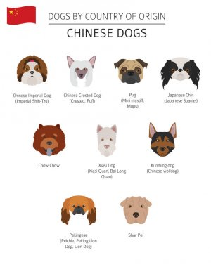 Dogs by country of origin. Chinese dog breeds. Infographic templ