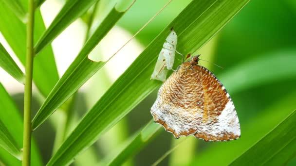 Butterfly on green leaf.