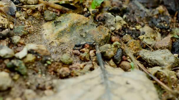 Mravenci přesunout hnízdo na zemi