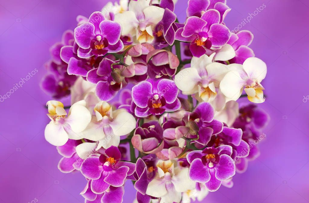 White and purple orchids.