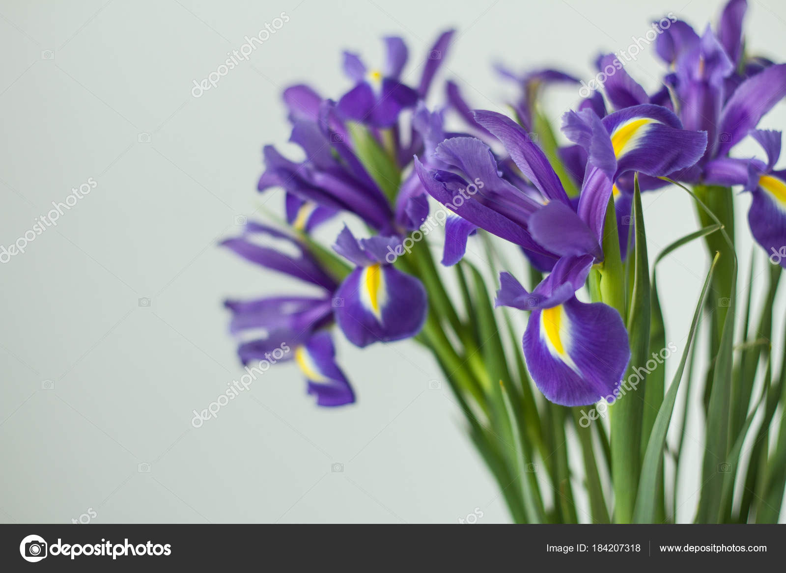 Delicate Holiday Bouquet Iris Flowers Light Background Stock Photo