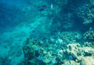 "Картина, постер, плакат, фотообои ""коралловым рифам Красного моря"", артикул 176039272"