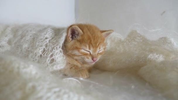 vörös hajú kis cica macska alszik becsomagolt-ban kötött kendőt molyhos videó