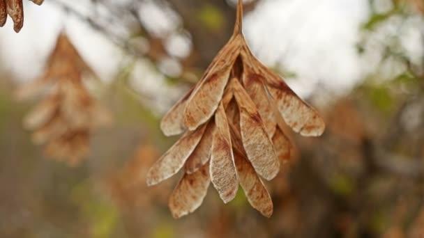 foglie secche acero autunno natura di ramo dellalbero in elicottero