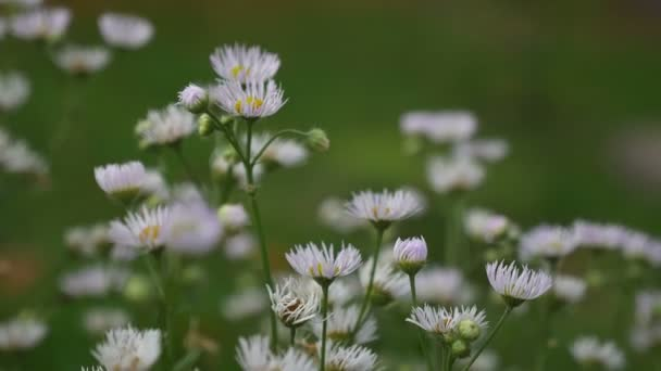 white flowers in the field on a green background nature landscape