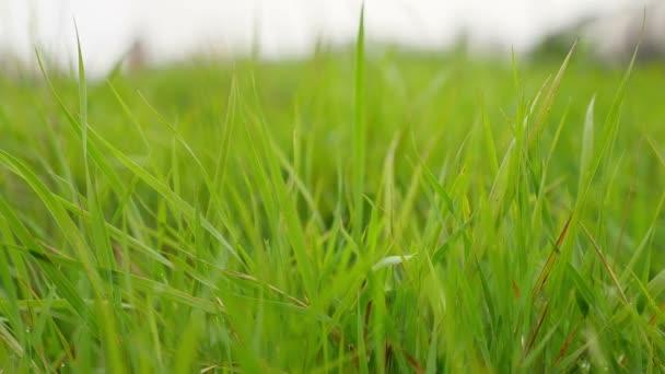 zelená tráva polní krásná příroda