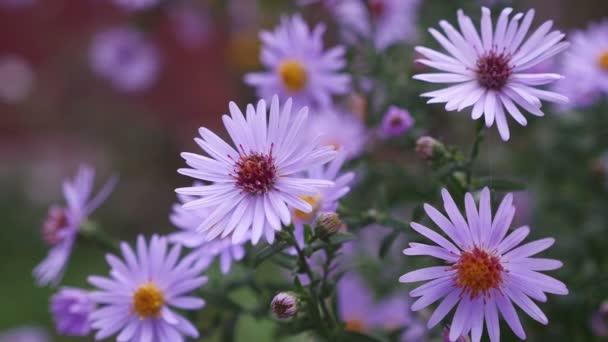 květy fialové přírodní bush na červeném pozadí