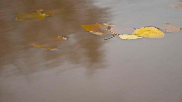 déšť na podzim v louži žluté listy přírodní plovoucí stromy