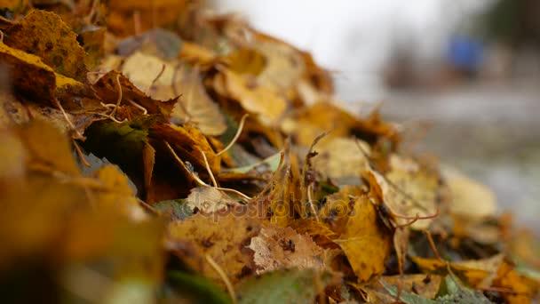 haldy špinavé mokré žluté listy stromů podzimní pozadí přírody