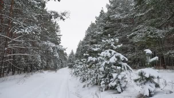 Winter Weg Kiefer Weihnachtsbaum Wald Tierwelt Winterlandschaft, schöner Schnee ist