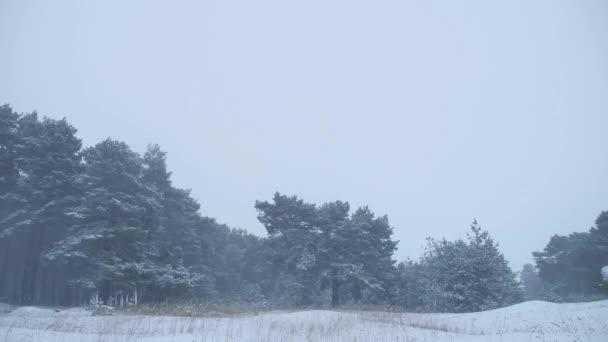 schöne Natur Weihnachtsbaum in Schneesturm Winterlandschaft am späten Abend in Schneefall Landschaft