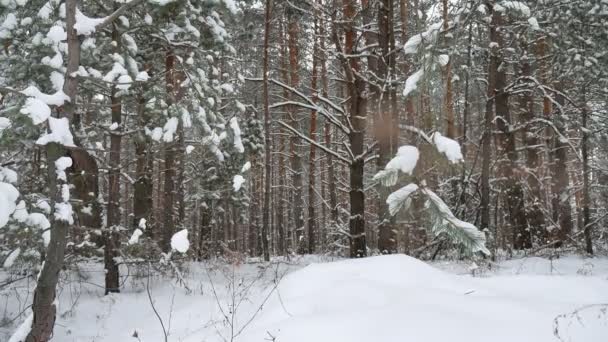 Dry trunks of pine christmas tree tree trunks winter forest landscape of wild nature