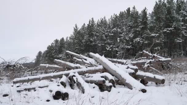 sawmill logs of pine trees in snow winter forest Christmas tree nature landscape