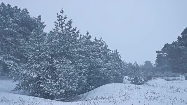 schöne Weihnachtsbaum Natur im Schneesturm Winterlandschaft am späten Abend in Schneefall Landschaft