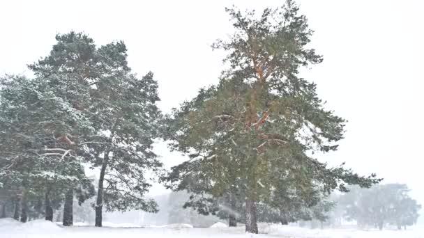 schöne Schneesturm Weihnachtsbaum Natur in der Winterlandschaft am späten Abend in Schneefall Landschaft