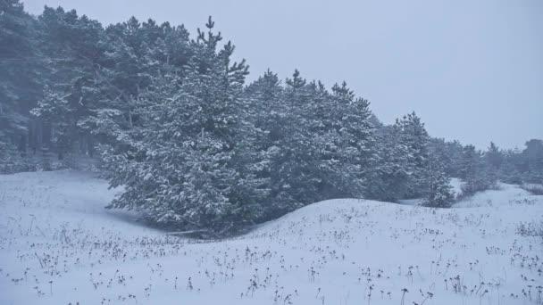 Krásný vánoční strom v blizzard přírody zimní krajina v pozdě večer v krajině sněžení