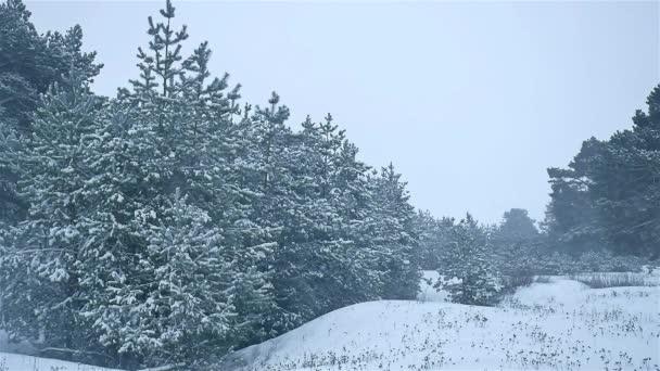 sněhová bouře woods sněžení, zimní příroda, blizzard vánoční strom a borovice lesní krajina