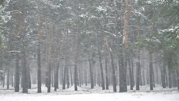 Schneesturm Natur Schneesturm die Wälder Schnee Winter, Weihnachtsbaum und Kiefernwälder Landschaft