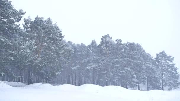 schöne Weihnachten Schneesturm Baum in der Natur Winterlandschaft am späten Abend in Schneefall Landschaft
