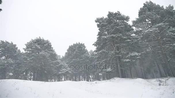 Schneesturm die Wälder Schneesturm Winter Natur, Weihnachtsbaum und Kiefernwald Landschaft