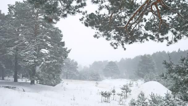 schöner Weihnachtsbaum Natur Schneesturm in Winterlandschaft am späten Abend in Schneefall Landschaft