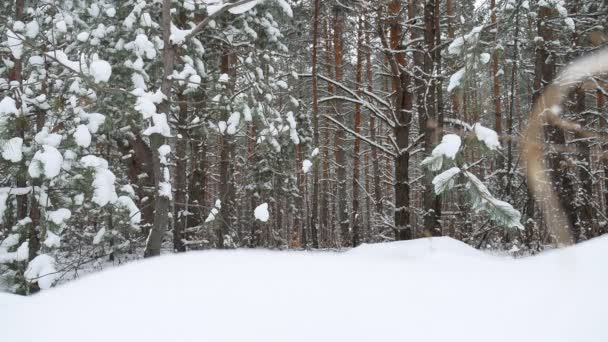 Weihnachtsbaum Natur Zweig in Schnee Kiefer Winter Feenwald Landschaft