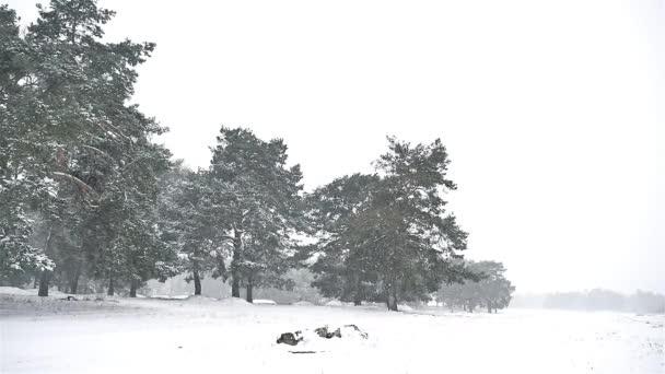 Schneesturm Schneesturm im Naturwald Schnee Winter, Weihnachtsbaum und Kiefernwald Landschaft