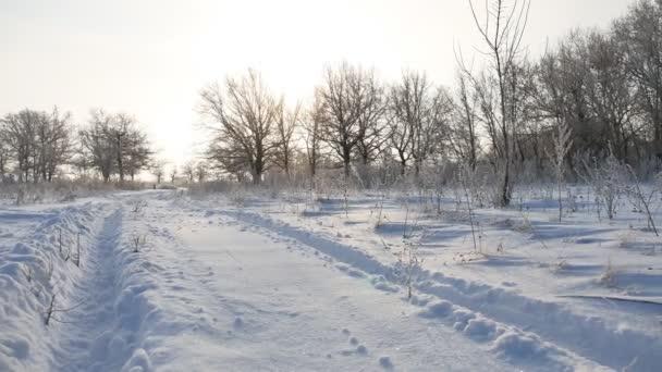 Straße Weg im Schnee Winterlandschaft schön Golf Schnee Sonne Blendung Natur Sonnenlicht
