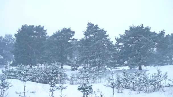 schöner Weihnachtsbaum Schneesturm in der Winterlandschaft in der Natur am späten Abend in Schneefall Landschaft