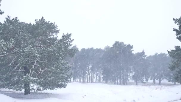 Krásný vánoční strom blizzard v zimní krajině v pozdě večer v krajině přírodní sníh