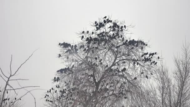 birds sitting on tree, a flock bird of crows