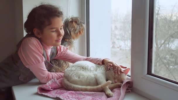 teen dívka a domácí kočka a pes se dívala z okna, kočka spí pet